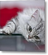 Kitten Metal Print by Melanie Viola
