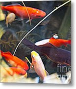 Koi Pond The Symbol Of Love And Friendship Metal Print by Artist and Photographer Laura Wrede