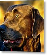 Lab Puppy At Sunset Metal Print by Kristina Deane