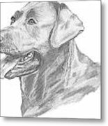 Labrador Dog Drawing Metal Print by Catherine Roberts