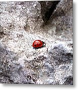 Ladybird Metal Print by Lucy D
