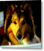 Lassie Come Home Metal Print by Karen Wiles