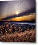 Late For Dinner Metal Print by Phil Koch
