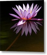 Lavendar Reflections Metal Print by Sabrina L Ryan