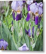 Lavender Iris Group Metal Print by Teresa Mucha