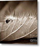 Leaf Muncher Metal Print by Luke Moore
