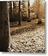 Leafy Autumn Woodland In Sepia Metal Print by Natalie Kinnear
