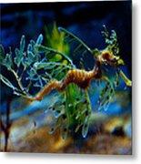 Leafy Sea Dragon Metal Print by Tim Nichols
