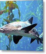 Leopard Shark Metal Print by Barbara Snyder