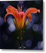 Lily After A Shower Metal Print by Raymond Salani III
