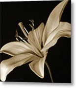 Lily Metal Print by Sandy Keeton