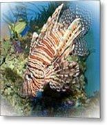 Lion Fish 2 Metal Print by TN Fairey