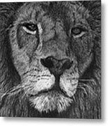 Lion Of Judah Metal Print by Bobby Shaw