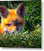 Little Red Fox Metal Print by Bob Orsillo