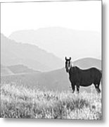 Lone Horse Metal Print by B Christopher