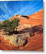 Lone Juniper Metal Print by Inge Johnsson