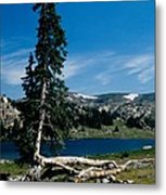 Lone Tree At Pass Metal Print by Kathy McClure