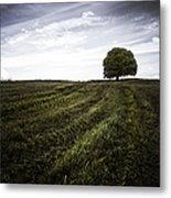 Lone Tree  Metal Print by John Farnan