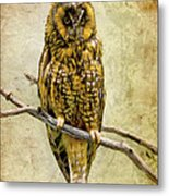 Long Eared Owl Metal Print by Ray Downing
