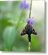 Long Tailed Skipper Metal Print by Laura Fasulo