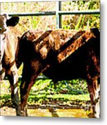 Looking At You Metal Print by Artist and Photographer Laura Wrede