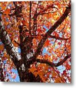 Looking Up Metal Print by Barbara Shallue