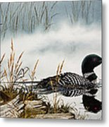 Loons Misty Shore Metal Print by James Williamson