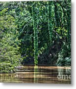 Louisiana Bayou Toro Creek Swamp Metal Print by D Wallace