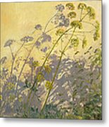 Lovage Clematis And Shadows Metal Print by Timothy  Easton