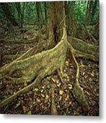 Lowland Tropical Rainforest Metal Print by Ferrero-Labat