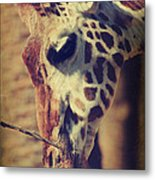 Lunchtime Twigs Metal Print by Laurie Search