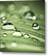 Macro Raindrops On Green Leaf Metal Print by Elena Elisseeva