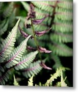 Magical Forest 3 Metal Print by Karen Wiles