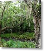 Magnolia Plantation 4 Metal Print by Ron Kandt