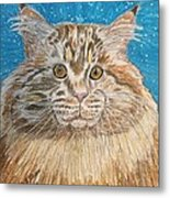 Maine Coon Cat Metal Print by Kathy Marrs Chandler