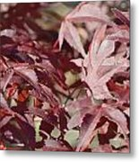 Maine Maple Leaves Metal Print by Lena Hatch