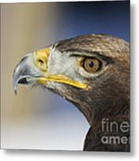 Majestic Golden Eagle Metal Print by Inspired Nature Photography Fine Art Photography