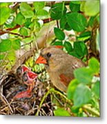 Mama Bird Metal Print by Frozen in Time Fine Art Photography