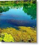 Mammoth Springs Water Vegetation Metal Print by Cindy Croal