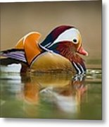 Mandarin Metal Print by Yuri Peress
