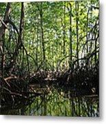mangrove forest in Costa Rica 2 Metal Print by Rudi Prott