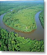 Mangrove Forest In Mahakam Delta Metal Print by Cyril Ruoso