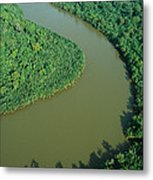Mangrove Rhizophora Sp In Mahakam Delta Metal Print by Cyril Ruoso