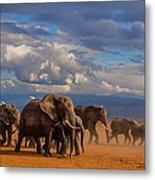 Matriarch On Amboseli Metal Print by Pieter Ras