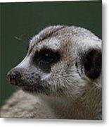 Meerket - National Zoo - 01137 Metal Print by DC Photographer