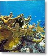 Mermaid Camoflauge Metal Print by Paula Porterfield-Izzo