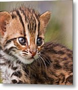 Miniature Leopard Metal Print by Ashley Vincent