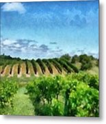 Mission Peninsula Vineyard Ll Metal Print by Michelle Calkins