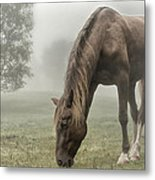 Misty Morning Metal Print by Peter Lindsay
