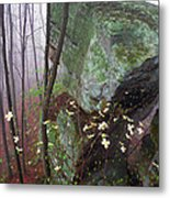 Misty Woods Metal Print by Thomas R Fletcher